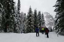 Photo - Ski de fond, cru 2016